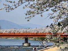 #角館 #桜 #さくら #サクラ