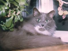 """I had my cat for 17 years - but even that wasn't time enough""  See my new column post with Catster.com   http://www.catster.com/lifestyle/cat-kitten-rescue-adoption-mittens-rainbow-bridge"