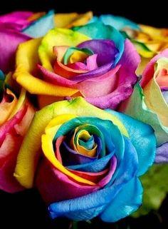 O amor é o melhor modo de pensar, viver nossa vida As rosas também são símbolo do amor, e que com ela venha todos os bons sentimentos