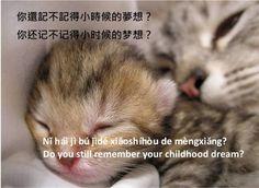 https://www.facebook.com/ZhongWenGuShi/photos/a.10151479270013234.507871.359604593233/10153208976558234/?type=1
