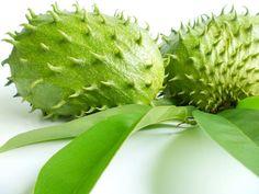 Graviola, als Waffe gegen den Krebs - Können Sie sich vorstellen, dass eine Frucht wirksamer sein kann als eine Chemotherapie? ➜ Die Blätter der Stachelannone töten nicht nur Krebszellen. Sie verbessern den Zuckerspiegel bei Diabetikern, sie wirken beruhigend und krampflösend. Die Rinde des Baumes bekämpft Bakterien. Die Blätter, die Rinde und der Samen des Graviola-Baumes töten Parasiten und eignen sich als gutes Anti- Wurmmittel. Mehr erfahren?