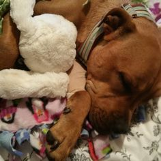 @kylierochelle42 please tell Shelby I still love my bunny...
