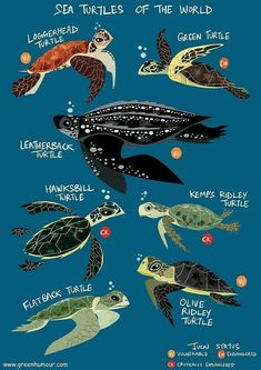 Sea turtle types
