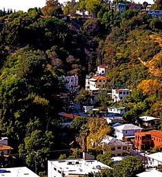 """""""The house was located in Beachwood Canyon, a veined scramble of roads pumping out of old Hollywood and reaching far up into the hills below the iconic sign. Most of the streets twisted into the many crevices, narrowing as the elevation grew until they were just thin slits barely enough for one car to pass. There were no three-point turns in Beachwood Canyon."""""""