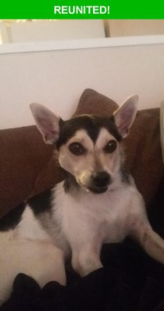 Great news! Happy to report that Louie has been reunited and is now home safe and sound! :)