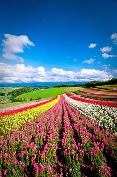 Hokkaido, Japan | 21 Most Colorful And Vibrant Places In The World #plant #awersome #flower #nature #tree #garden #wonderful #sexy flowers #carde #magic #color #500px #dream #putdownyourphone #plants
