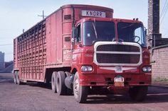 WHITE 5000 All Truck, Big Rig Trucks, Semi Trucks, Cattle Trailers, White Truck, Farm Trucks, Cab Over, Motor Company, Vintage Trucks