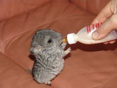 Everyone loves cute animals and this post is full of it! Enjoy these cute animal pictures.