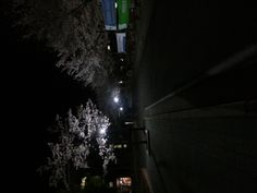 cherry blossoms at night :)