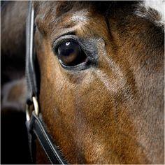 pony horse photography uk