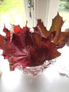 Efterårsbladene er bare så fine, men de forsvinder så hurtigt i vinden. Derfor har jeg taget dem med ind og shinet dem lidt op ved at lime glimmer på i passende farver. Nu pynter de så i vindueskarmen imens vinden blæser videre udenfor.