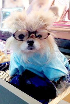 Giggy Vanderpump--I heart dogellectuals! ♥