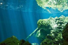 Mexico - Riviera Maya Scuba Diving photos