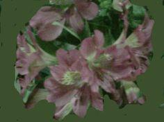Con estas flores se pueden hacer un bonito ramo de novia.