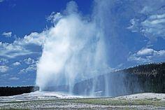 Old Faithful Yellowstone National Park