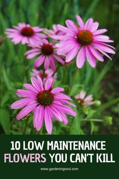 10 Low Maintenance Flowers You Cant Kill In this guide we are going to take a look at 10 plants that are easy to grow and almost impossible to kill. The post 10 Low Maintenance Flowers You Cant Kill appeared first on Flowers Decor. Container Plants, Container Gardening, Gardening Tips, Organic Gardening, Easy Garden, Lawn And Garden, Garden Web, Garden Kids, Growing Flowers