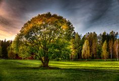 Photograph Autumn II by Rosen Velinov on Golf Courses, Country Roads, Autumn, Nature, Photograph, Trees, Beautiful, Photography, Naturaleza