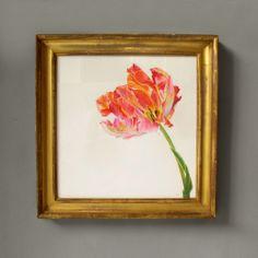A Watercolour of a Tulip  C 2010 England