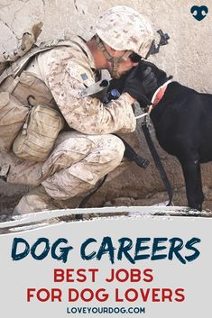In this article, we take a look at some of the most popular occupations that dog lovers might want to consider. Also, we look at how you can get into those careers and what you can expect from the role. #LoveYourDog #DogCareers #JobsWorkingWithDogs #DogJobsInTheArmy #ArmyJobsWithDogs #WorkingWithDogs #ILoveDogs Jobs Working With Dogs, That's Love, I Love Dogs, Dog Information, R Dogs, Good Job, Fun Activities, Your Dog, Dog Lovers