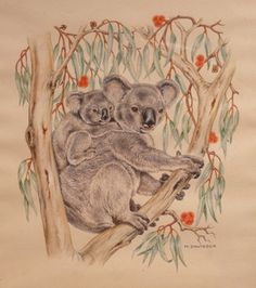 """A koala and young and red flowering gum.  On the right a kookaburra and red flowering gum.    Two watercolours by the twins Mary and Peggy Davidson signed M.Davidson.    These watercolours show the twin sisters' interest in Australian Flora and Fauna. All of the eight watercolours in my collection show their attention to anatomical and botanical detail. They were """"illustrators"""" rather than """"artists"""". And Peggy, Australian Animals, Flora And Fauna, My Collection, Travel Posters, Wood Carving, Illustrators, Wildlife, Kangaroos"""