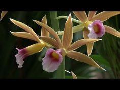 TV BREAKING NEWS L'orchidée au coeur du Jardin des Plantes à Paris - http://tvnews.me/lorchidee-au-coeur-du-jardin-des-plantes-a-paris/