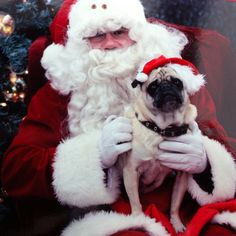 picture with Santa #pug #furbaby #christmas