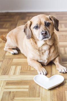 Hungry Puggle, heart dish, #sponsored #WeBelieveInNB @naturalbalance   ©Alice G Patterson Photography   Syracuse lifestyle dog photographer