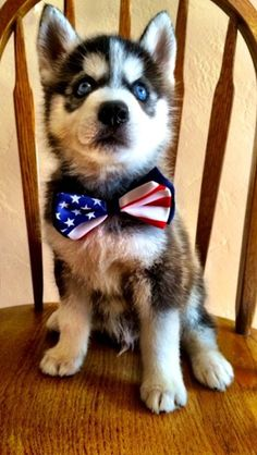 Reagan the frat pup is ready for more USA World Cup victories. - The Total Frat Move Archive Cute Puppies, Dogs And Puppies, Doggies, Usa World Cup, Baby Animals, Cute Animals, Husky Pics, Paws And Claws, Mans Best Friend