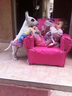 1 camada de Bullterrier córdoba argentina criadero infierno blanco y mi bella hija Julieta