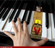 Motivation to play the correct black keys! Music Pics, Music Photo, Piano Funny, Piano Pictures, Thelonious Monk, Arcade Fire, Mouse Traps, Animal Jokes, Animal Funnies