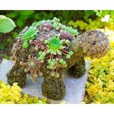 Succulent Baby Turtle Topiary #turtle #plants #garden For Jennifer Davis!
