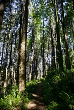 Portland hiking guide: The 20 best places to hike in the city | OregonLive.com