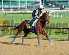 Caption: Dortmund<br /> Horses on the track at Churchill Downs on Sun. April 29, 2015, in Louisville, Ky., in preparation for the Kentucky Derby and Kentucky Oaks.<br /> Wed4_29 Edit image709<br /> Photo by Anne M. Eberhardt