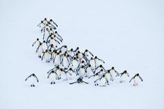 South Georgia Island Penguins Image |National Geographic Your Shot Photo of the Day