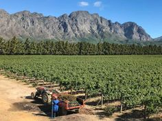 The best things to do in Franschhoek including the wine tram, gourmet restaurants and all the details you need for an amazing trip to the Cape Winelands. Tanzania, Kenya, Digital Nomad, Africa Travel, Cape Town, South Africa, Things To Do, Wine, Explore