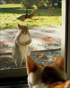 かわいい動物たちの笑える画像:ハムスター速報