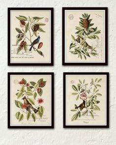 Vintage Bird and Botanical Print Set – Belle Maison Art – Printed on archival canvas - Makes a charming vintage display - Multiple Sizes - Free US Shipping – Belle Maison Art
