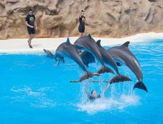 Loro Parque Dolphins Fish, Pets, Animals, Parrot, Parks, Animals And Pets, Animales, Animaux, Animal