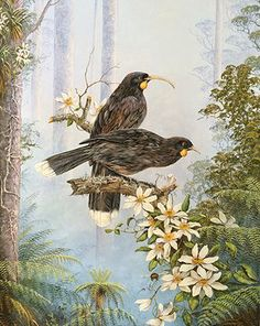 Jeanette Blackburn is one of New Zealand's foremost landscape and wildlife artists. Her paintings and prints are sought by collectors worldwide. Many of her artworks can be found on display in her gallery in Rotorua, New Zealand. Animal Drawings, Art Drawings, New Zealand Wildlife, New Zealand Art, Nz Art, Maori Art, Vintage School, Bird Art, Extinct Birds