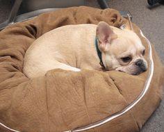 Teddy loves the Woofie Cushion!