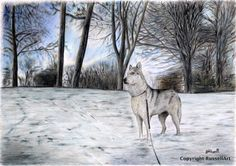 #Siberian Husky #Contemplation- Dog A4 A3 or A2 Size #Limited Edition Art Print o,  View more on the LINK: http://www.zeppy.io/product/gb/3/236209072/