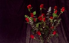 WALLPAPERS HD: Bunch of Red Roses