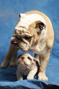 cutest mascots ever!!!!! butler blue 2 & 3 :)