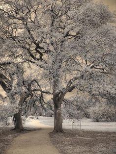 Photograph - The Road Less Traveled by Jane Linders , Infrared Photography, Time Of The Year, Wild Flowers, Austin Tx, Wall Art, Nature, Art Ideas, Trees, Leaves
