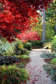 rot gefärbter Fächerahorn und grüne Ziergräser darunter