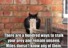 """Ha ha ha.  Like when my cat """"hides"""" behind a blade of grass.  Talk about delusional."""