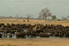 Hwange auf Simbabwe Reiseführer