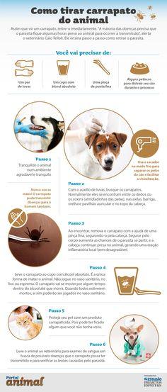 Infográfico ensina passo-a-passo como eliminar pulgas e carrapatos do seu cão e gato | Portal Animal - o canal de pets do Estadão Baby Dogs, Pet Dogs, Dog Cat, Doggies, Pet Vet, Pet Puppy, Puppy Care, Happy Animals, Animals And Pets