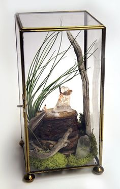 Natural elements only add to a terrarium's beauty.  Take a walk outside and find pinecones, twigs, vine, etc to add natural interest to your creation!  Moss is beautiful in a terrarium, as well. Make it your own!  Express your creativity.  Add that tiny leprechaun if you want!