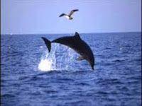 quelle piccole pesti: Il delfino e la colomba: canzone per bambini usata...